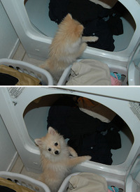 Laundryhelper