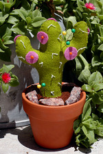 Cactus_flower_pcushion